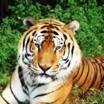 FreeImageWorks-150x150 Zwierzęta