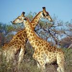 FreeImageWorks5-150x150 Zwierzęta