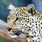 mirfot-animals-8-150x150 Zwierzęta