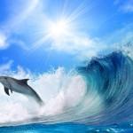 Delfiny-21-150x150 Zwierzęta