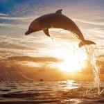 Delfiny-3-150x150 Zwierzęta