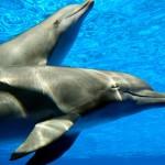 Delfiny-5-150x150 Zwierzęta