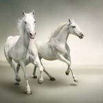 Konie-2-150x150 Zwierzęta