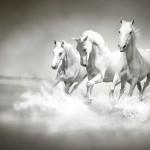 Konie-3-150x150 Zwierzęta