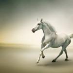 Konie-4-150x150 Zwierzęta