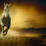 Konie-5-150x150 Zwierzęta