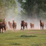 Konie-6-150x150 Zwierzęta