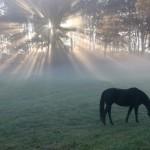 Konie-7-150x150 Zwierzęta