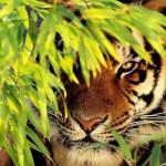 Koty-19-150x150 Zwierzęta