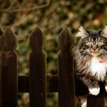 Koty-8-150x150 Zwierzęta