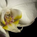 Kwiaty-1-150x150 Kwiaty