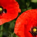 Kwiaty-10-150x150 Kwiaty