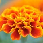 Kwiaty-11-150x150 Kwiaty