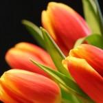 Kwiaty-12-150x150 Kwiaty