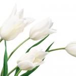 Kwiaty-13-150x150 Kwiaty
