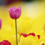Kwiaty-2-150x150 Kwiaty