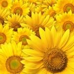 Kwiaty-25-150x150 Kwiaty