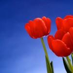 Kwiaty-26-150x150 Kwiaty
