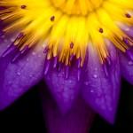 Kwiaty-27-150x150 Kwiaty