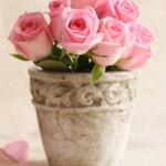 Kwiaty-29-150x150 Kwiaty