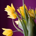 Kwiaty-31-150x150 Kwiaty