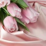 Kwiaty-32-150x150 Kwiaty