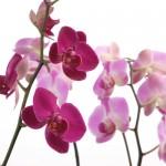Kwiaty-37-150x150 Kwiaty