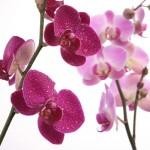 Kwiaty-38-150x150 Kwiaty
