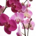 Kwiaty-39-150x150 Kwiaty