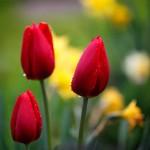 Kwiaty-4-150x150 Kwiaty