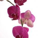 Kwiaty-40-150x150 Kwiaty
