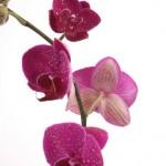Kwiaty-41-150x150 Kwiaty