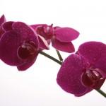 Kwiaty-42-150x150 Kwiaty