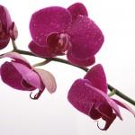 Kwiaty-43-150x150 Kwiaty