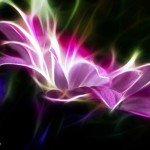 Kwiaty-46-150x150 Kwiaty