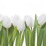 Kwiaty-5-150x150 Kwiaty
