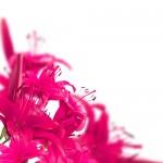 Kwiaty-50-150x150 Kwiaty