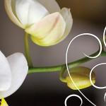 Kwiaty-54-150x150 Kwiaty