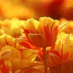 Kwiaty-57-150x150 Kwiaty