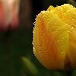 Kwiaty-58-150x150 Kwiaty