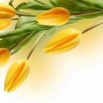 Kwiaty-59-150x150 Kwiaty