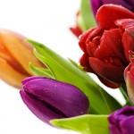 Kwiaty-60-150x150 Kwiaty