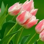 Kwiaty-61-150x150 Kwiaty