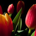 Kwiaty-64-150x150 Kwiaty