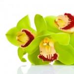 Kwiaty-65-150x150 Kwiaty