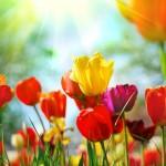 Kwiaty-67-150x150 Kwiaty