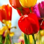 Kwiaty-69-150x150 Kwiaty