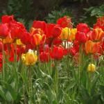 Kwiaty-70-150x150 Kwiaty