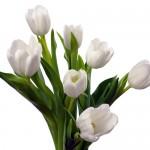 Kwiaty-71-150x150 Kwiaty
