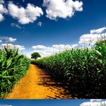in_the_corn_field_hd_widescreen_wallpapers_2560x1600-150x150 Krajobrazy